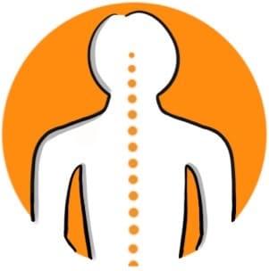 1- Colonne vertébrale droite