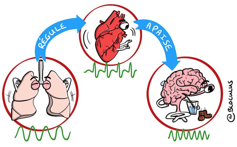 Cohérence Cardiaque : Comment aider notre cerveau à sortir d'un épisode de stress intense